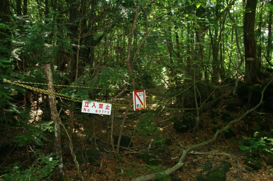 The Suicide Forest of Mount Fuji in Aokigahara – The ...